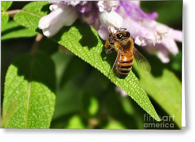 Bee At Work Greeting Card by Kaye Menner