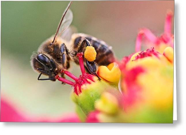 Bee At Work Greeting Card by Ralf Kaiser