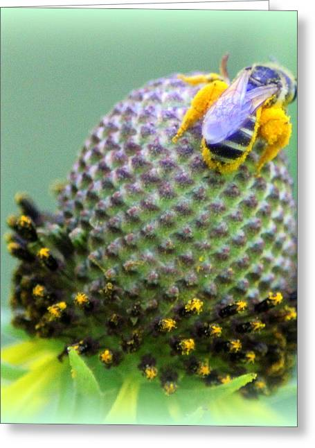 Bee Covered In Pollen Greeting Card by Maureen  McDonald