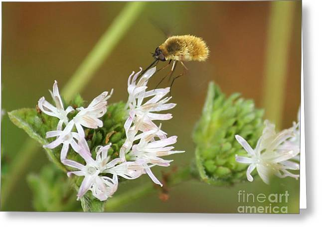 Bee Fly Don't Bother Me Greeting Card