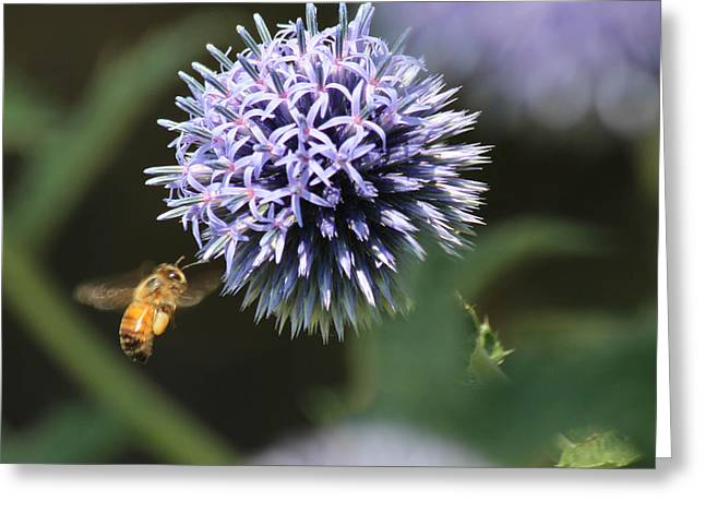 Bee In Flight Greeting Card by Janet Mcconnell