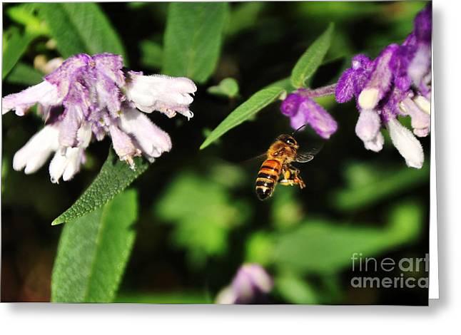 Bee In Flight Greeting Card by Kaye Menner