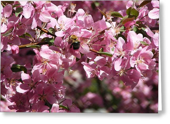 Bee In The Tree  Greeting Card