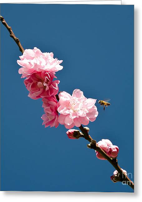 bee Greeting Card by Baywest Imaging