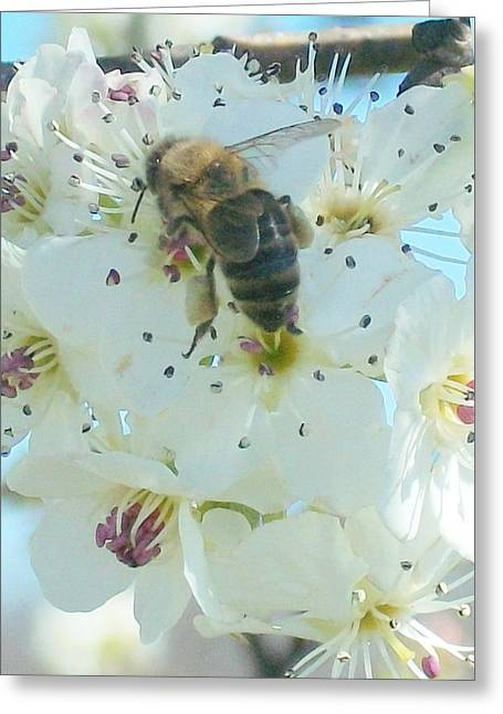 Bee Nice Greeting Card by Wide Awake Arts