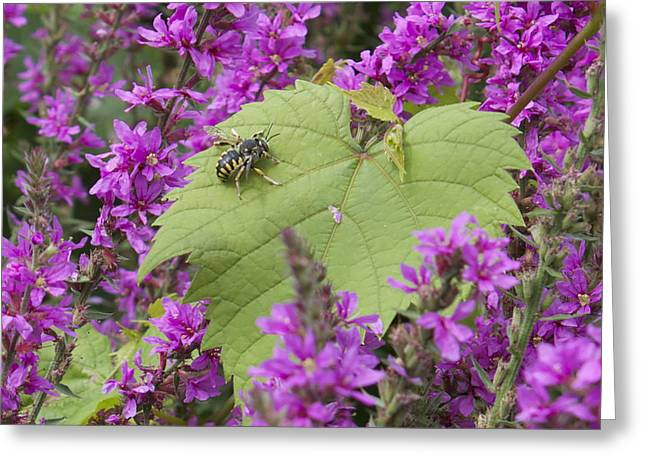 Bee On A Leaf Greeting Card by Michel DesRoches