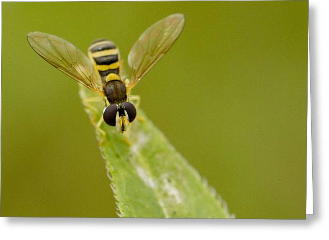 Bee On Belief  Greeting Card by Dean Bennett