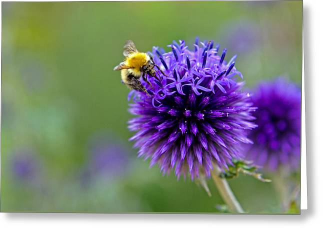 Bee On Garden Flower Greeting Card