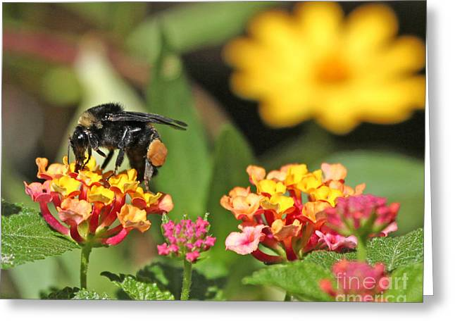 Greeting Card featuring the photograph Bee On Lantana Flower by Luana K Perez