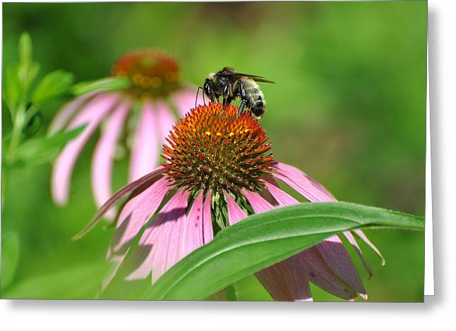 Greeting Card featuring the photograph Bee On Pink Flower by Jodi Terracina