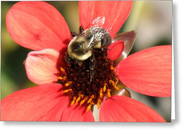 Bee With Flower Greeting Card