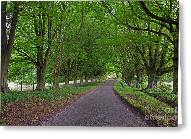 Beech Tree Lined Country Road Greeting Card by Richard Thomas