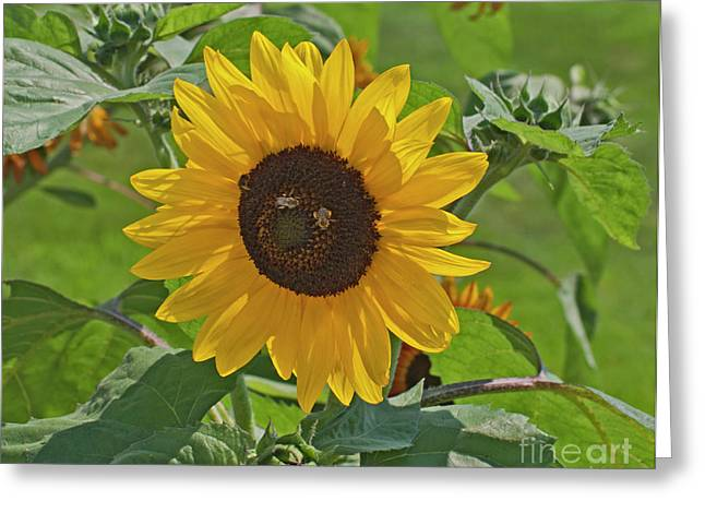 Bees And The Sun Greeting Card