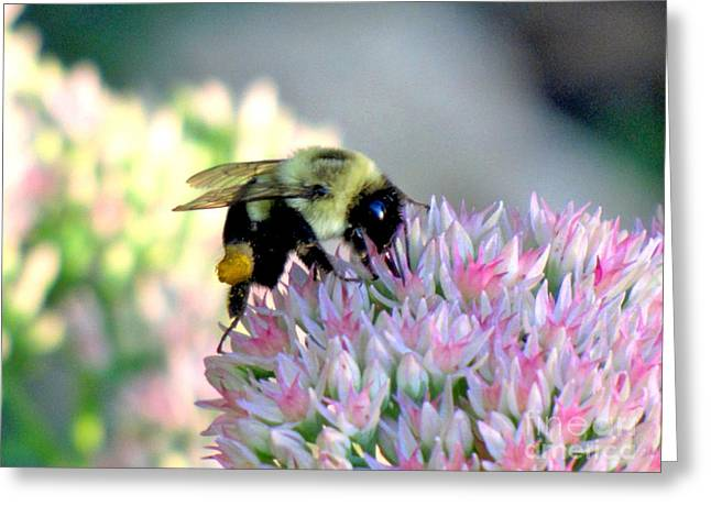 Bees Knees Greeting Card by Marilyn Smith