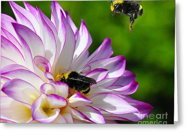 Greeting Card featuring the photograph Bees N Blooms by Jack Moskovita