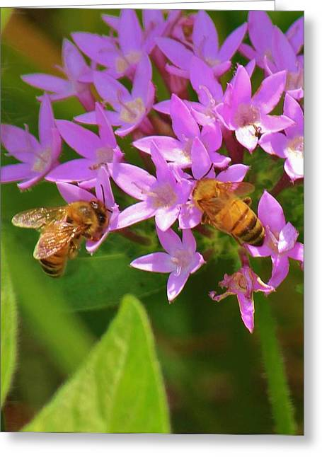 Greeting Card featuring the photograph Bees One by Craig Wood