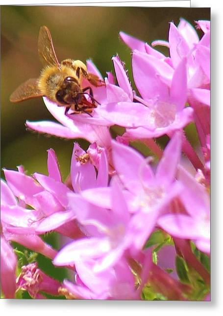 Greeting Card featuring the photograph Bees Two by Craig Wood