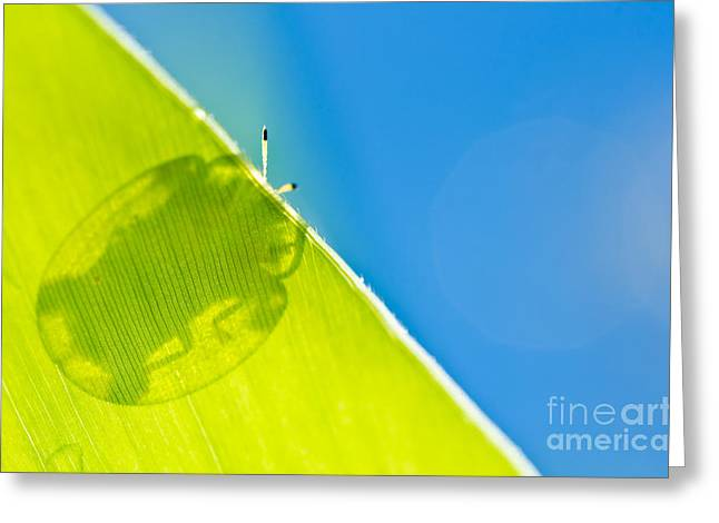 Beetle And Blue Sky Greeting Card by Peerasith Chaisanit