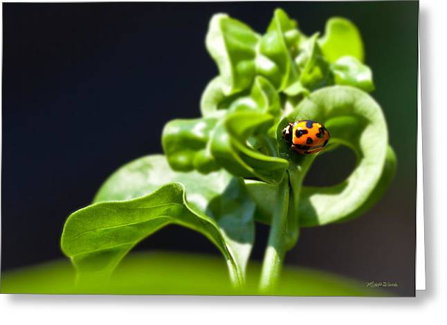Beetle Of Our Lady Greeting Card