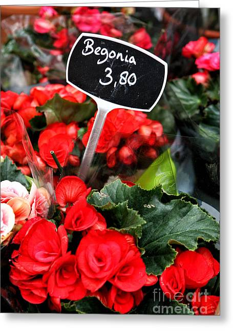 Begonia Greeting Card by Leslie Leda
