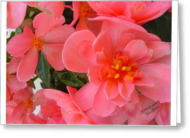 Greeting Card featuring the photograph Behold My Beauty by Frank Wickham