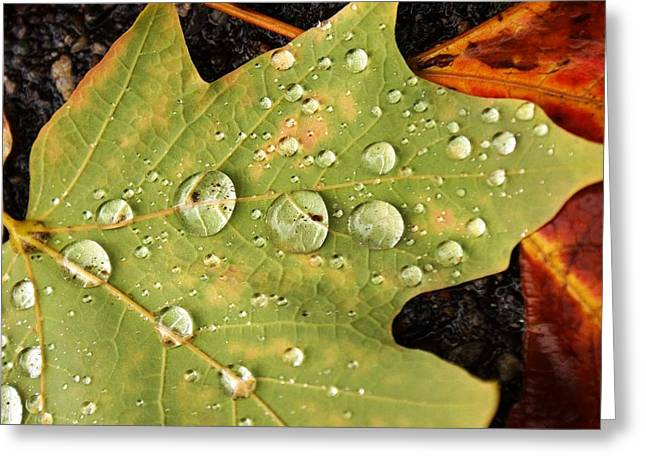 Bejeweled Leaves Greeting Card by Matthew Green