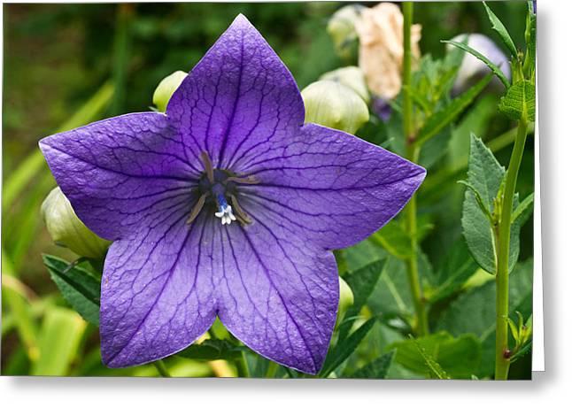 Bell Flower Blossom 1 Greeting Card by Douglas Barnett