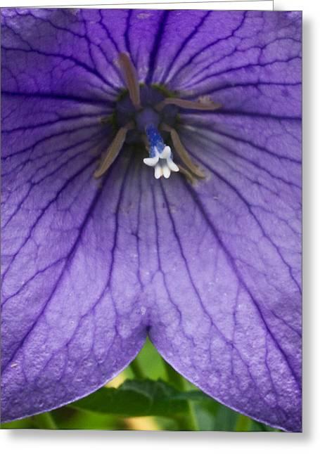Bell Flower Upclose Greeting Card by Douglas Barnett