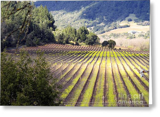 Greeting Card featuring the photograph Bella Vineyards by Leslie Hunziker