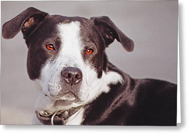 Beloved Pet - Portrait Greeting Card by Steve Ohlsen