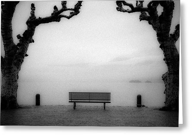 Bench Under Sycamore Trees Greeting Card