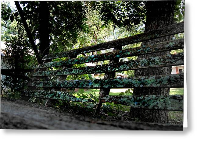 Benched Greeting Card by Tammy Cantrell