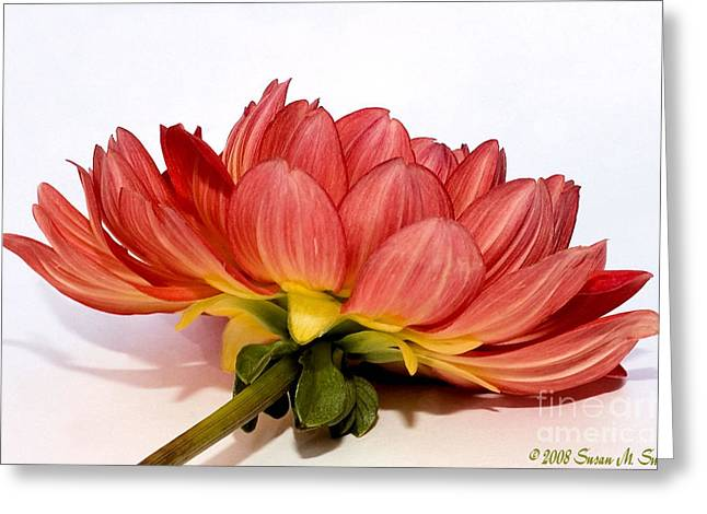 Beneath Me Greeting Card by Susan Smith