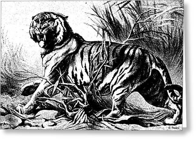 Bengal 2 Greeting Card by George Pedro