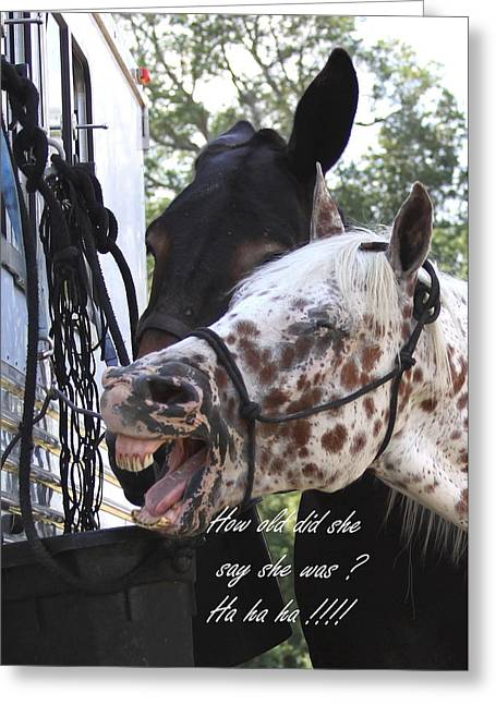 Benson Mule Day Birthday Card Photo Greeting Card by Travis Truelove