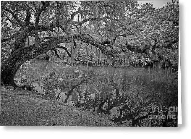 Greeting Card featuring the photograph Bent Oak River Reflection by Larry Nieland