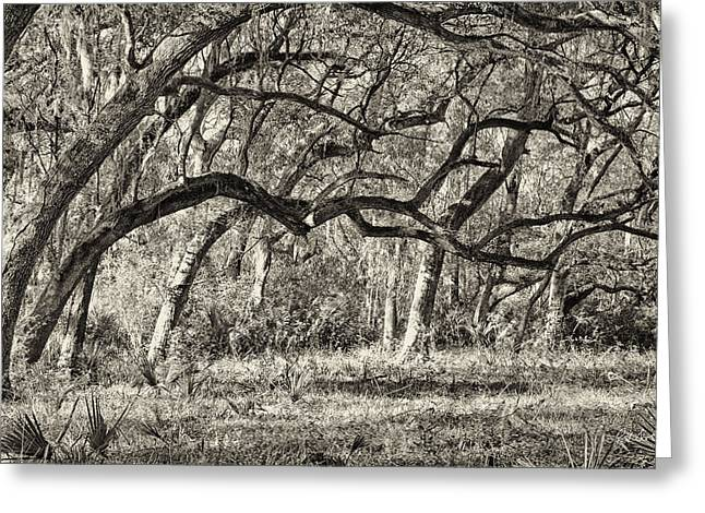 Bent Trees Sepia Toned Greeting Card by Phill Doherty