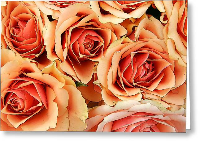 Bergen Roses Greeting Card
