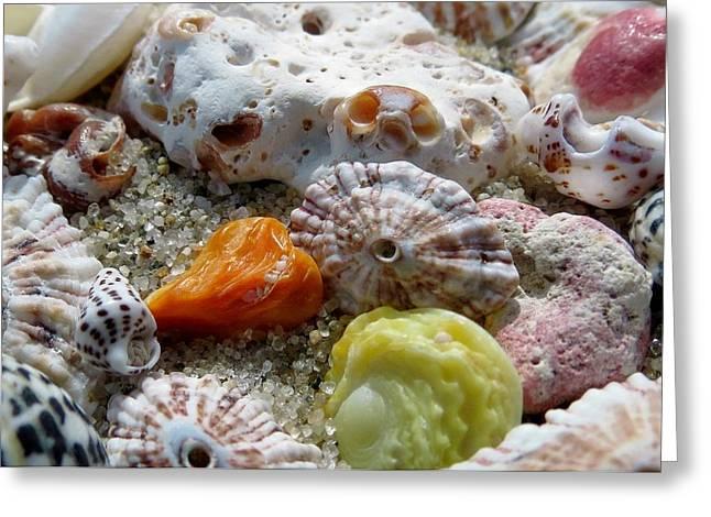 Bermuda Beach Shells Greeting Card by Janice Drew