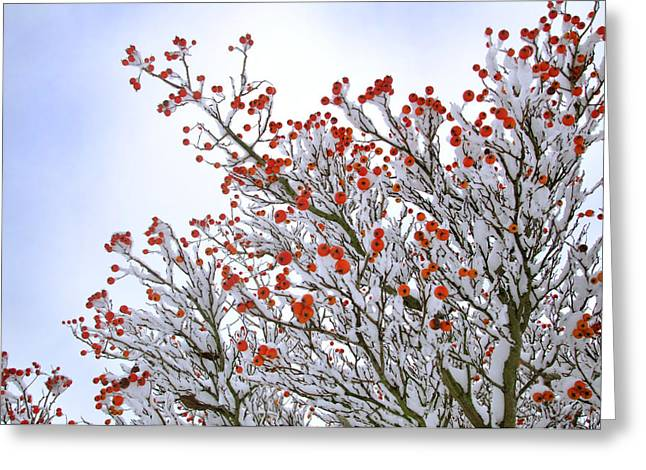 Berries Greeting Card by Lisa Williams