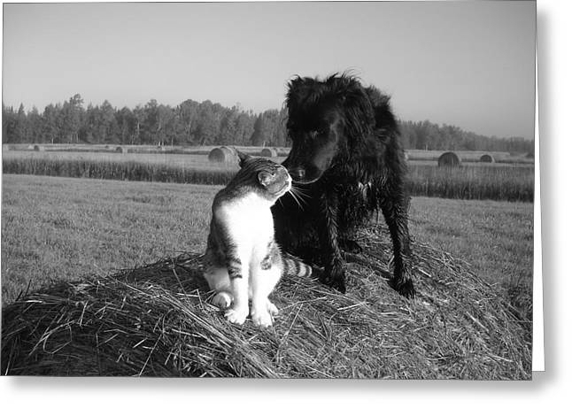 Best Buddies Black And White Greeting Card