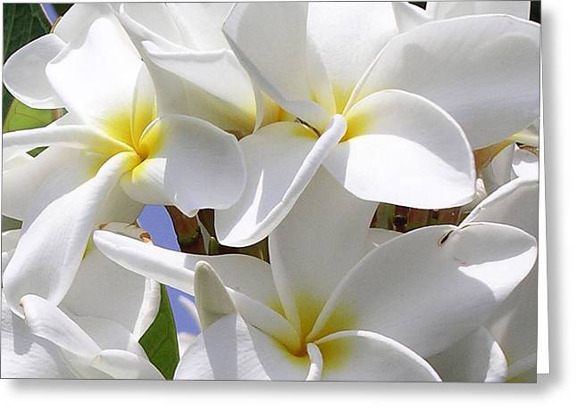 Best Plumeria Greeting Card by Karen Nicholson