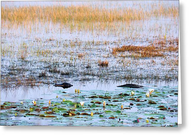 Beware Of Still Waters Greeting Card by Jan Amiss Photography