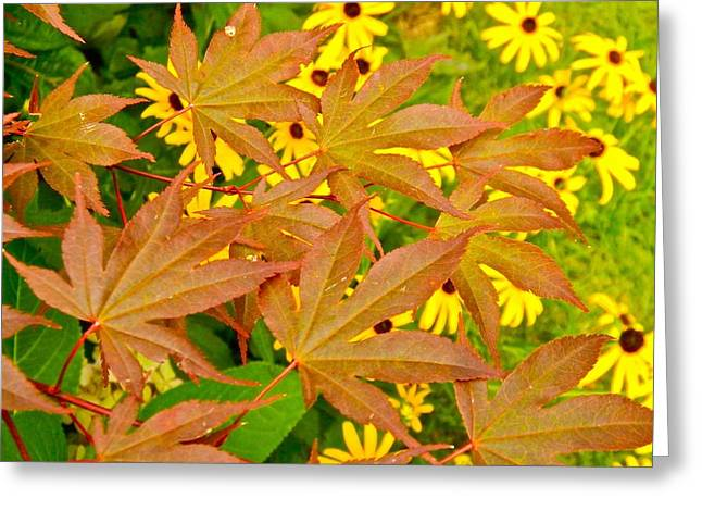 Beyond The Leaves Greeting Card by Randy Rosenberger
