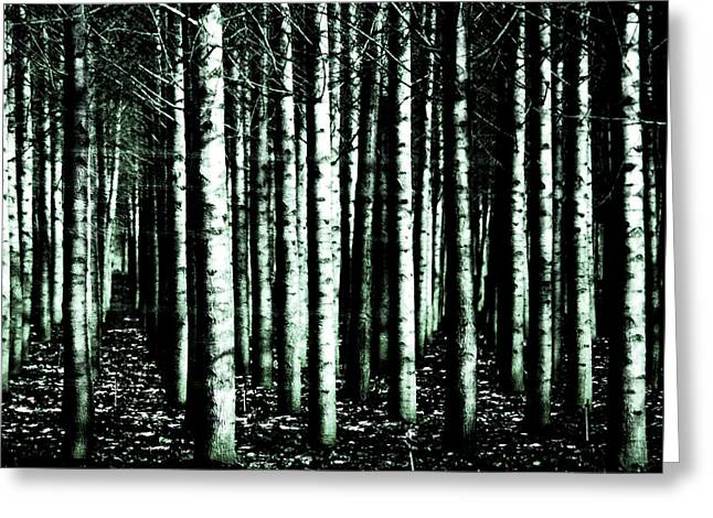 Beyond The Trees Greeting Card by Terrie Taylor