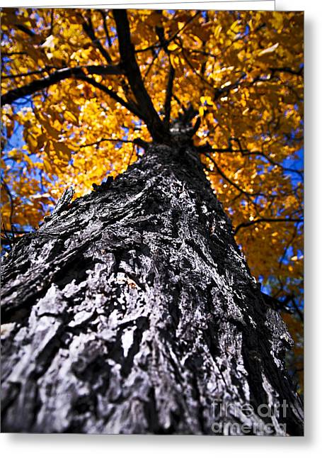 Big Autumn Tree In Fall Park Greeting Card by Elena Elisseeva