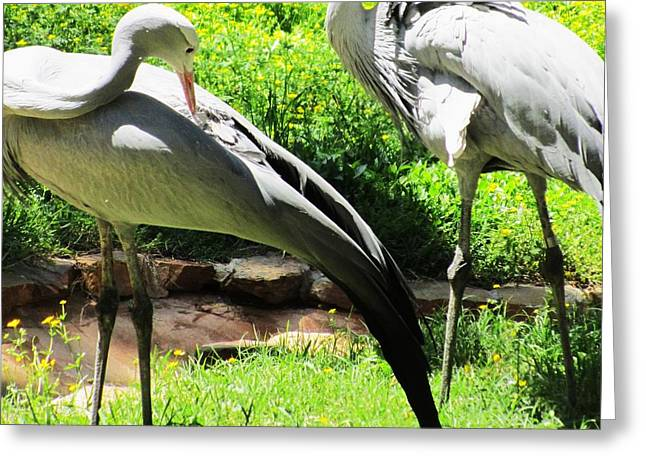 Big Birds Greeting Card by Todd Sherlock