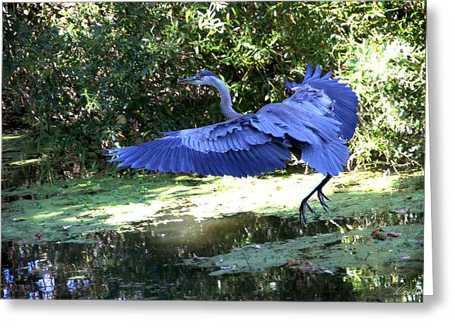 Big Blue In Flight Greeting Card