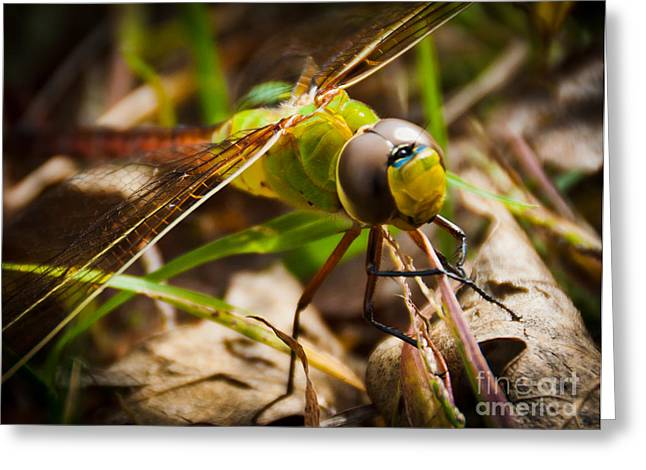Greeting Card featuring the photograph Big Brown Eyes by Cheryl Baxter