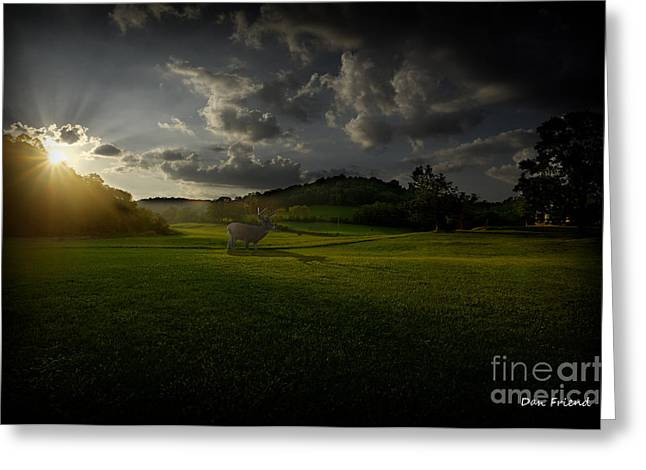 Big Buck In Field At Sunset Greeting Card by Dan Friend